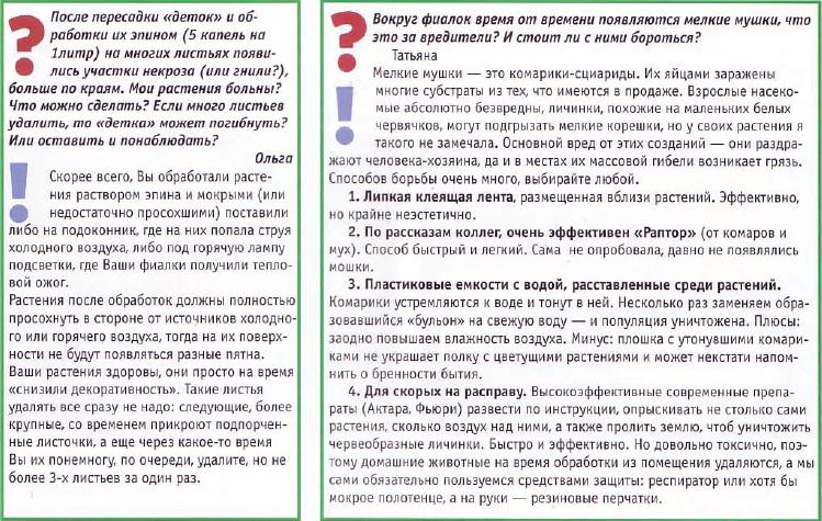 узамбарская фиалка или сенполия - Страница 2 05.11