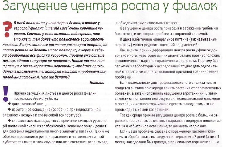 узамбарская фиалка или сенполия - Страница 2 78